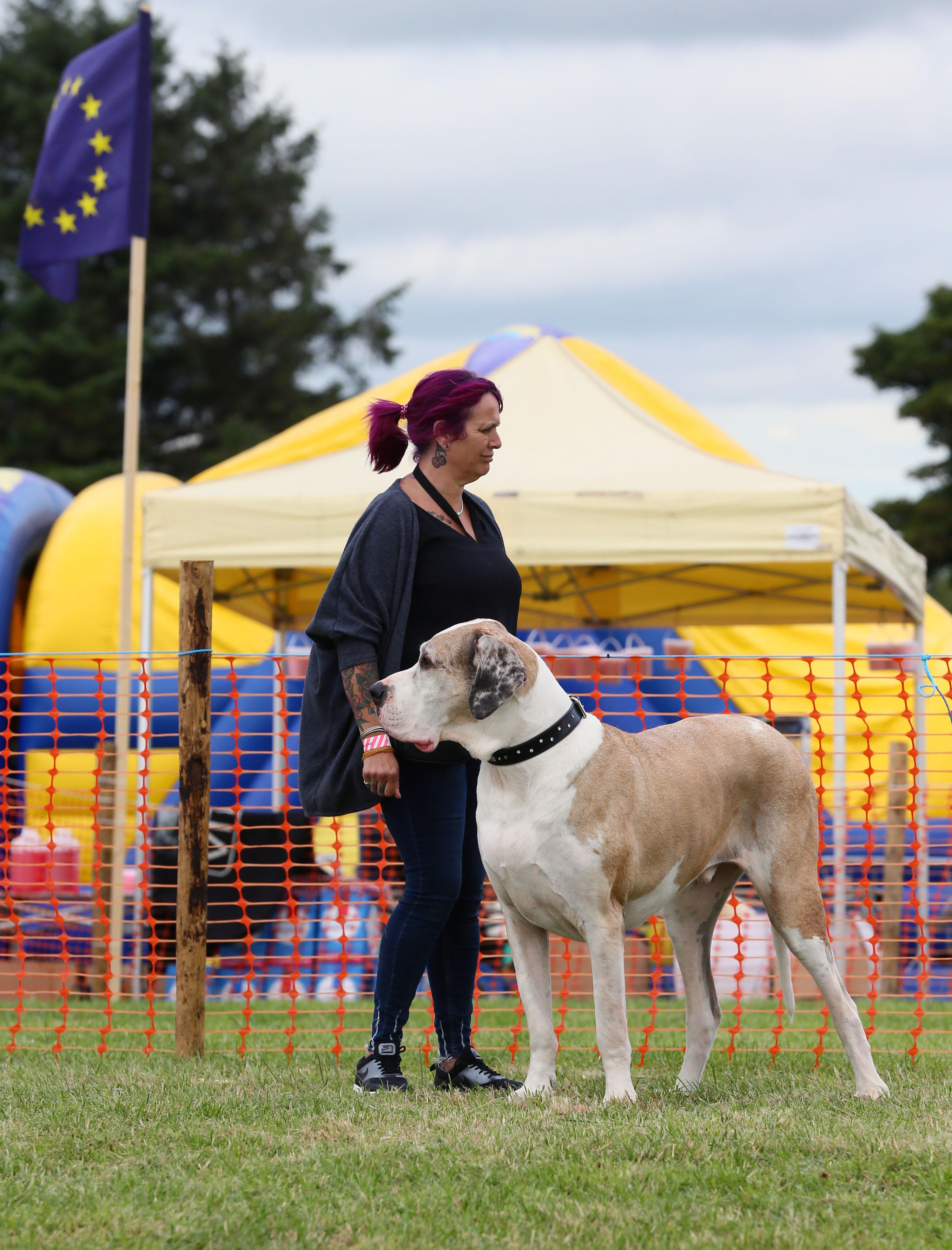 CE2P2136 large dog