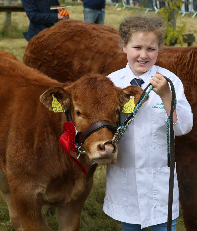 Patricia Moore, Buckfield Kilmeena (Buckfield Limousins) showing in the Overall Limousins class after winning in the January Heifer class at the Claremorris Agricultural Show. Photo: © Michael Donnelly