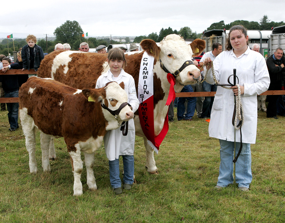 The Champion Simmental at the 88th Claremorris Agricultural Show, was won by Martin Regan Cloonfad, shown by from left:  Maeve and Jacintha Regan. Photo: © Michael Donnelly