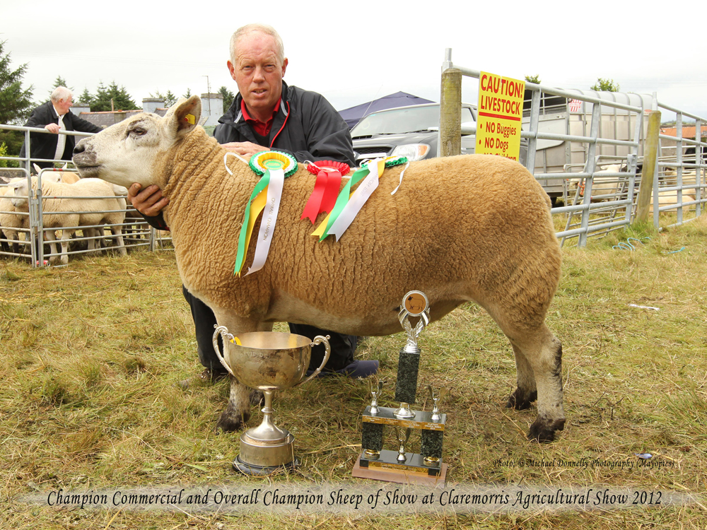 Aidan Fahey, Ardrahan Co Galway won the Champion Commercial  and Overall Champion Sheep of  Show of the 94th Claremorris Agricultural Show. Photo: © Michael Donnelly Photography (Mayopics)