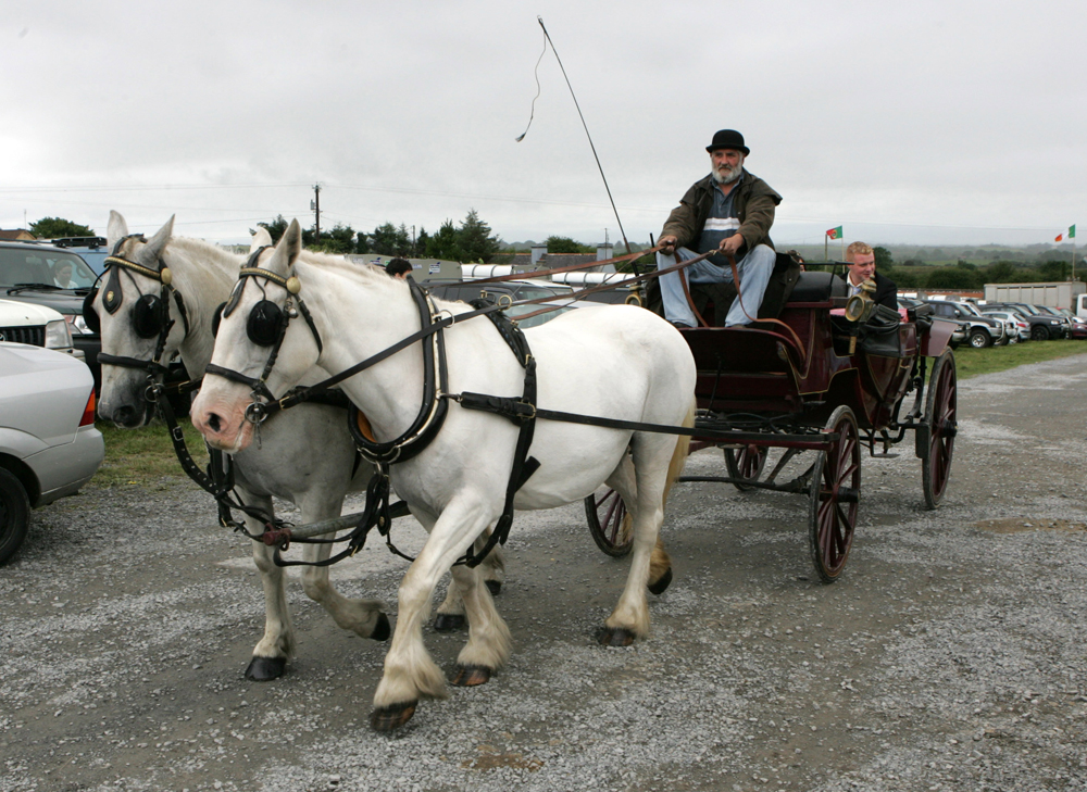 Arriving in style at the Claremorris Agricultural Showare Miss Claremorris (partly hidden) and Mr Claremorris. Photo: © Michael Donnelly