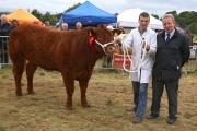 AO6U0862  Heifer