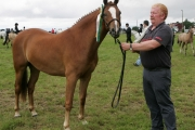 Tommy Gibbons, Mayfield, Claremorris  pictured with his Champion Pony of the Show at the 88th Claremorris Agricultural Show. Photo: © Michael Donnelly